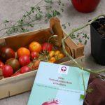 Bildungsangebote Barnim Panorama Tomatenvielfalt
