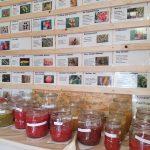 Tomatensaatgut aufbereitung August 2019