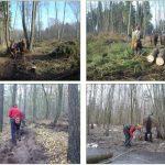Waldpferdehof - Forstarbeiten